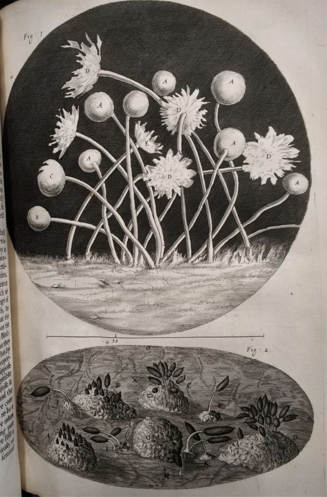A page from Hooke's Micrographia