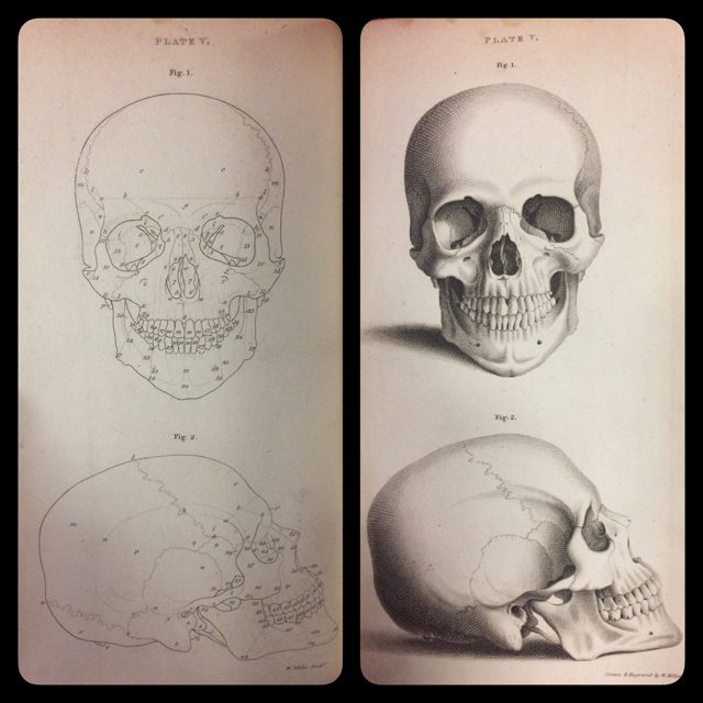 'This Plate exhibits a front and lateral view of the dried Skull of a Man, of a medium stature, aged thirty-one years […] the length of the line a, b, b, a on the Skull, was exactly four inches and three quarters.'