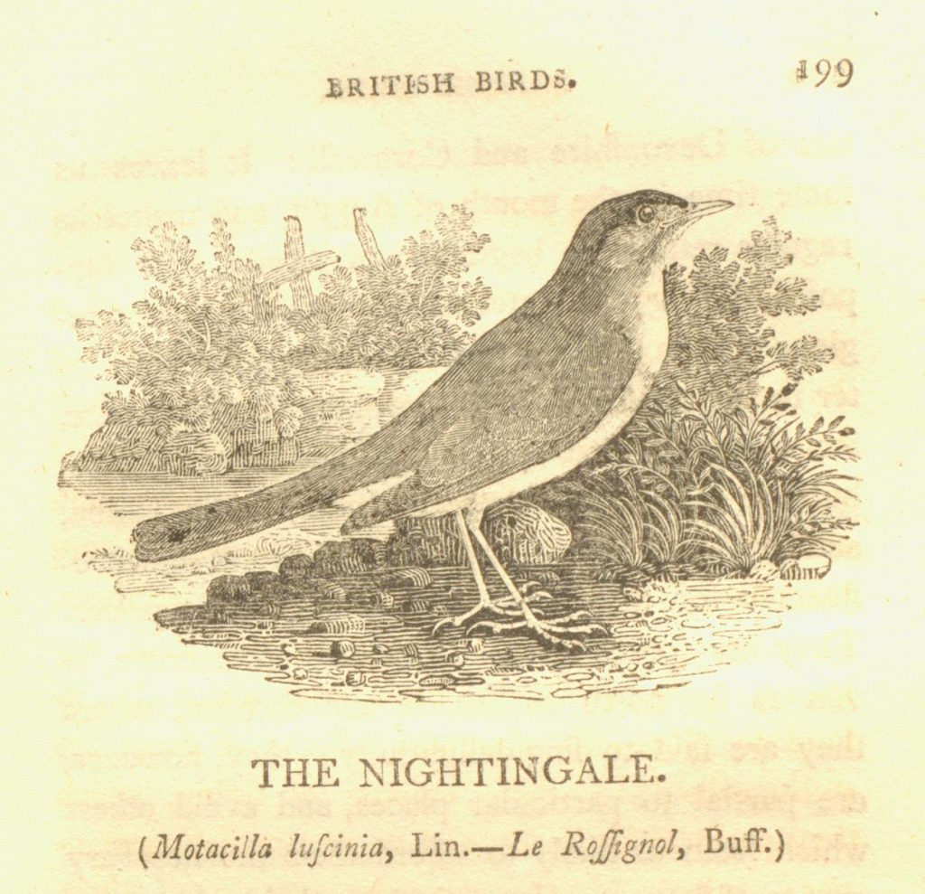 Nightingales in Abercromby Square – Manuscripts and More